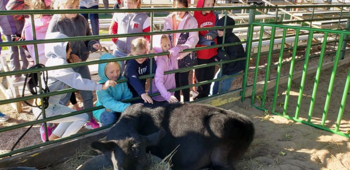 3rd Graders Learn About Animals Inside and Out